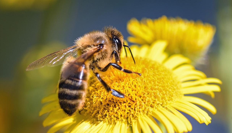 Imagen de las abejas terrestres